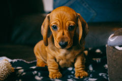 First day home Royalty Free Stock Photo