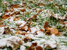 The first dropped-out snow has covered a green grass and yellow fallen leaves Stock Photography