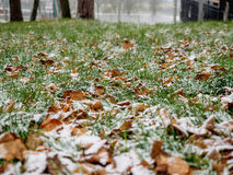 The first dropped-out snow has covered a green grass and yellow fallen leaves Royalty Free Stock Images
