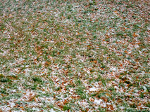 The first dropped-out snow has covered a green grass and yellow fallen leaves Stock Photo