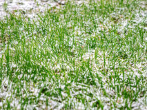 The first dropped-out snow has covered a green grass and yellow fallen leaves. At the end of October stock image