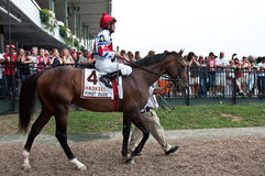First Dude With Jockey Ramon Dominguez Royalty Free Stock Image