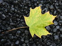 First fall colors Royalty Free Stock Image