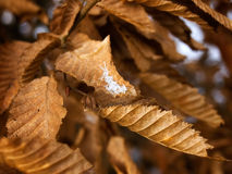 First fall frost Stock Images