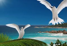 First flight. Birds, islands of Seychelles. The young bird (White Tern) is looking at adult and learning how to fly, safe, safety of flyght. The beautiful blue stock image
