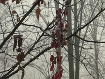 First floor with red leaves in a forest vegetation in the fog stock footage
