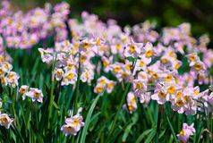 Flowers blooming in the summer royalty free stock photography
