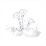 The first flowers of spring on a white background. Vector illustration Royalty Free Stock Image