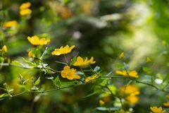 First forest spring flowers blurred background royalty free stock photography