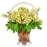 First forest springs flowers in vase,  isolated on white Stock Images