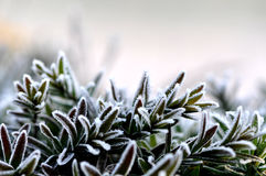 First frost Royalty Free Stock Images