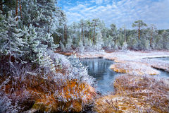 First frost in the autumn forest Royalty Free Stock Photography