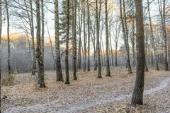 First Frost Stock Photography