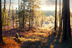 First frost in the autumn forest during hunt Stock Images