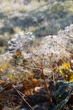 First frost in autumn park. Morning in november. Royalty Free Stock Photos