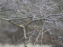 First frost - close up rime frozen bare cherry tree branches sno Stock Photography