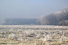 First Frost - Elements. Sun, Frost, Fog and Clouds all together to create a moody landcape royalty free stock images