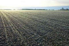 First frost on a field. Stock Photos