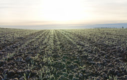 First frost on a field. Stock Image