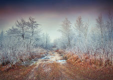 First frost in the forest. Foggy autumn sunset. Royalty Free Stock Photography