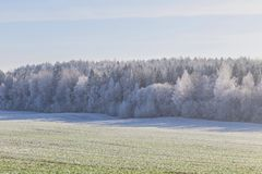 Free First Frost In The Forest. Belarusian Landscape. Beginning Of Winter. Stock Photography - 131908172