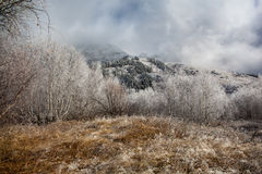 The first frost in the mountains. Royalty Free Stock Photography