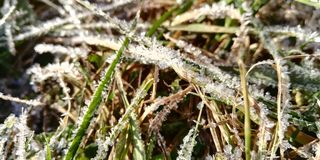 The first autumn frost, blue grass royalty free stock photos