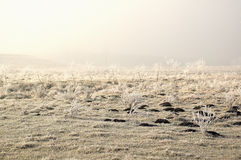 First Frost - White Light. Frost Field just before fog is spreading and sun is rising stock photos