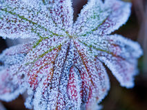 First Frost Royalty Free Stock Photos