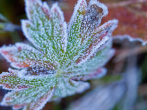 First Frost Stock Photos