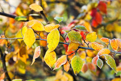 First frost on yellow, red leaves in autumn Stock Photos