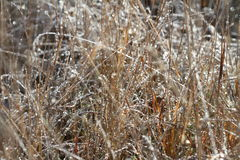First frosts in the field Royalty Free Stock Images