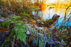 The first frosts, the frost on the grass and autumn leaves . Stock Photos