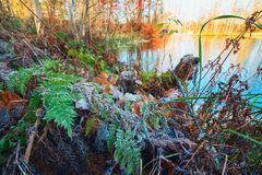 The first frosts, the frost on the grass and autumn leaves . Stock Image