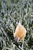 First frosty morning. Early morning grass and fallen leaf first time frozen in autumn stock images