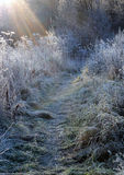 First Frosty Morning. Sun rays on the first frosty morning in the country Stock Photography