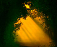 First Glimmer of Light Stock Photos