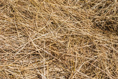 First Grass, Than Hay Stock Images