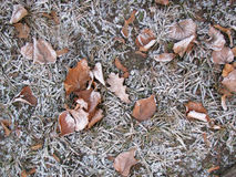 First gray hair - 3. The first winter frost on the fallen leaves in the park Stock Photos