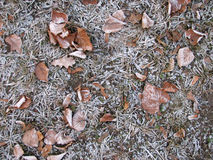 First gray hair - 1. The first winter frost on the fallen leaves in the park Royalty Free Stock Photos