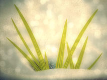 Green grass in snow. First green grass sprout in the snow background Royalty Free Stock Image