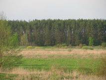 The first green. Pine trees in the distance. Meadow grass covered first.Trees are beginning to turn green stock photos