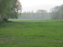 The first green. Pine trees in the distance. Meadow grass covered first.Trees are beginning to turn green stock images