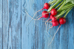 The first harvest of a young radish against from blue colored bo Stock Photography