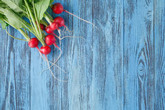 The first harvest of a young radish against from blue colored bo Stock Photos