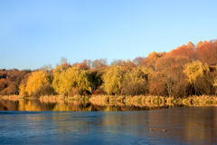 The first ice on a autumn pond Royalty Free Stock Photo