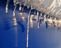 First icicles. Shining in sun rays Stock Photos