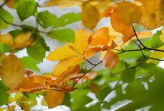 Autumn leaf colors Royalty Free Stock Photography