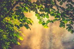 First leaves of spring tree in a mist and light stock photos