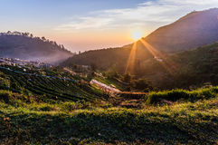 The first light of day on angkhang strawberry farm. This place is one of the romantic destination Stock Photos